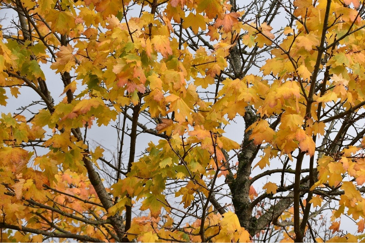 Prepare your trees and shrubs for the winter this fall